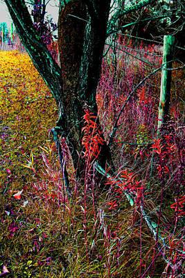 Photograph - Fenceline  Tree -  No. 2 -  Ver. 1 by William Meemken