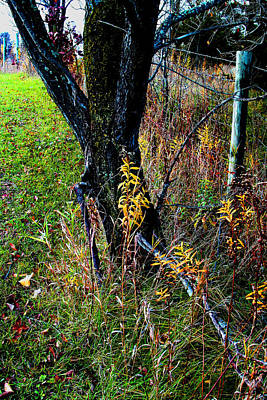 Photograph - Fenceline  Tree -  No. 2 by William Meemken