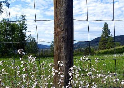 Photograph - Fenceline Wildflowers by Will Borden