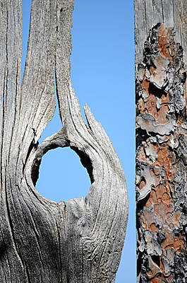Photograph - Fencework by Diana Douglass