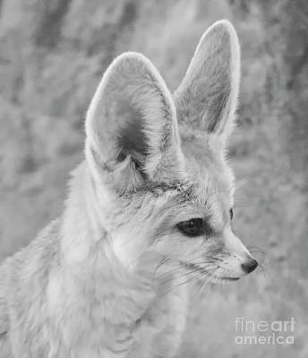 Photograph - Fennec Fox Profile by Ruth Jolly
