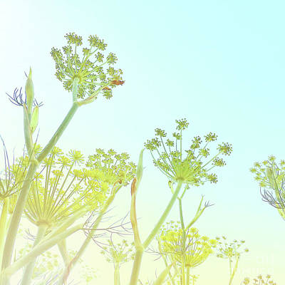 Photograph - Fennel As High As An Elephant's Eye by Cindy Garber Iverson