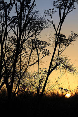 Photograph - Fennel Sunset by Jeffrey Ringer