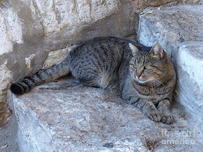 Photograph - Feral Cat by Phil Banks