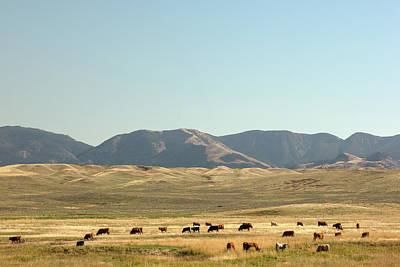 Judith Photograph - Fergus Herd by Todd Klassy