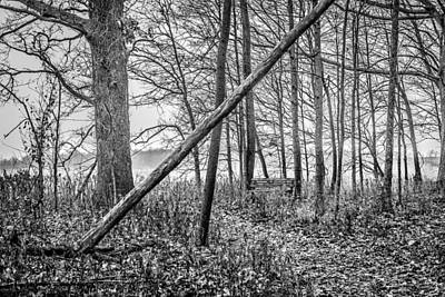 Photograph - Fermilab Woods 3 by Joni Eskridge