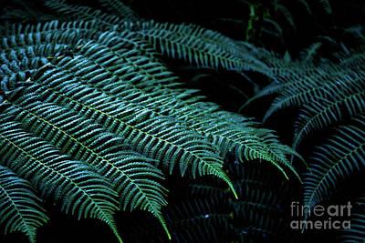 Photograph - Patterns Of Nature 6 by Zaira Dzhaubaeva