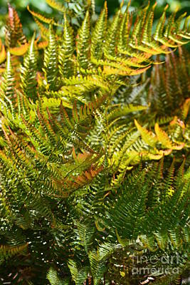 Photograph - Fern Abstract by Maria Urso