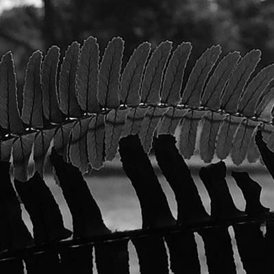 Photograph - Fern by Adam Graser