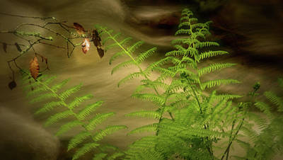 Photograph - Fern Against Rushing Water by Josephine Buschman