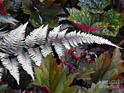 Photograph - Fern And Friends by Sarah Loft