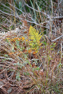 Photograph - Fern And Grasses - Autumn by rd Erickson