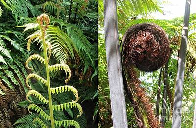 Photograph - Fern And Koru by Dianne  Connolly