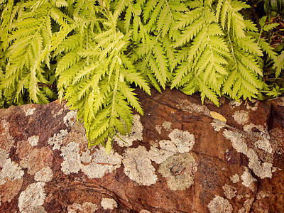 Photograph - Fern And Rock - Nature Photography by Ann Powell