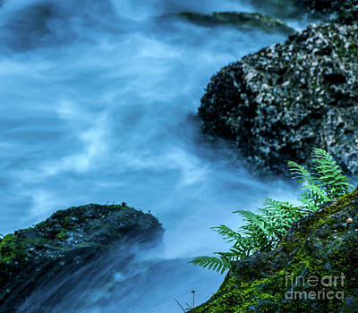 Fern Photograph - Fern And Water by Robert Brown