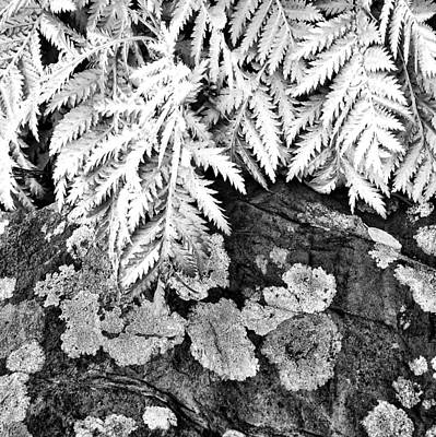 Photograph - Fern Black And White Photograph by Ann Powell