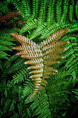 Photograph - Fern by Chrystal Mimbs
