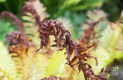 Ostrich Photograph - Fern Decay by Tim Gainey