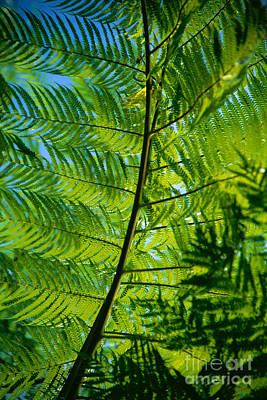 Overhang Photograph - Fern Detail by Himani - Printscapes