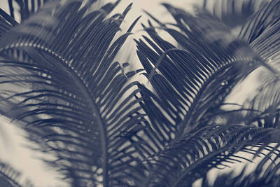 Photograph - Fern Drama by Toni Hopper