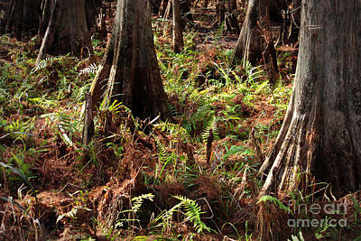 Forest Floor Photograph - Fern Forest Floor by Carol Groenen