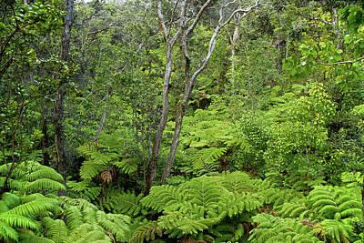 Photograph - Fern Forest by Robert Meyers-Lussier