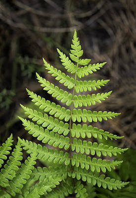 Photograph - Fern Fron 01 by Jim Dollar