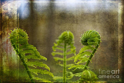 Photograph - Fern Frond by David Arment
