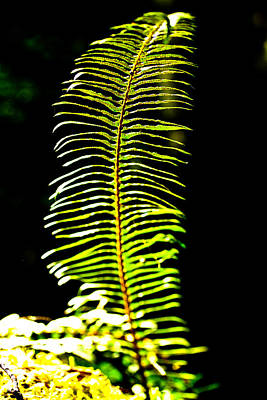 Photograph - Fern Frond by Marie Jamieson