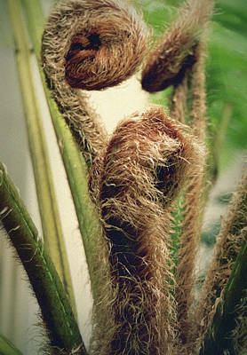Photograph - Fern Fronds by Nadalyn Larsen