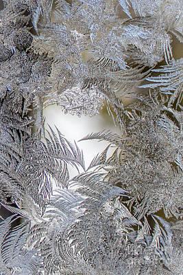 Wall Art - Photograph - Fern Frost 2 by Marj Dubeau