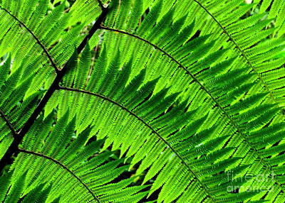 Photograph - Fern In Afternoon Light by Ranjini Kandasamy