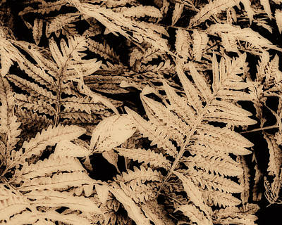 Photograph - Fern In Sepia by Ann Powell