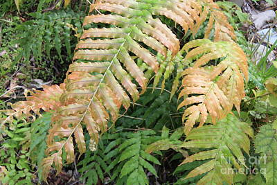 Photograph - Fern In Two Tones by Nareeta Martin