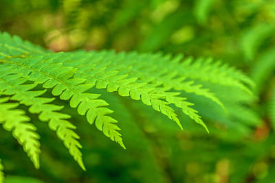 Photograph - Fern  by Keith Smith
