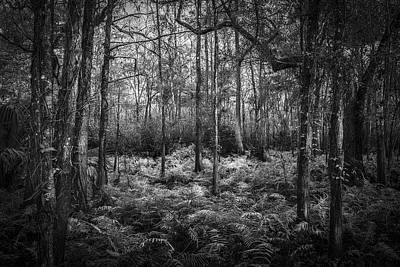 Photograph - Fern Lace B/w by Marvin Spates