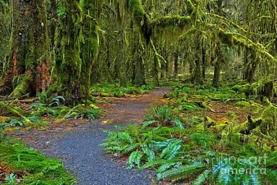 Photograph - Fern Laden Path by Adam Jewell