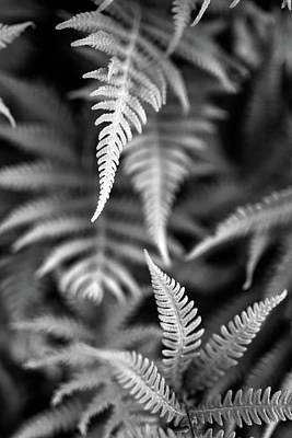 Photograph - Fern Layers by Rick Berk