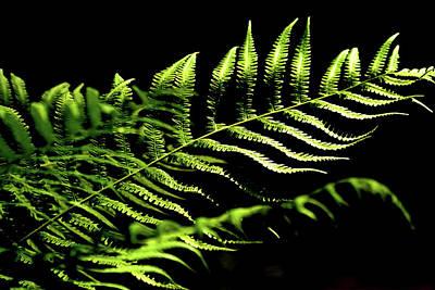 Photograph - Fern Leaf On Black by Nadalyn Larsen