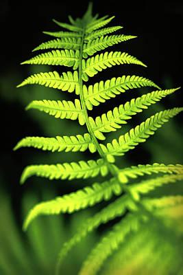 Photograph - Fern Leaf by Robert FERD Frank