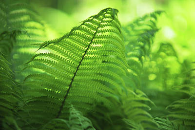 Photograph - Fern Leaves 1. Green World  by Jenny Rainbow