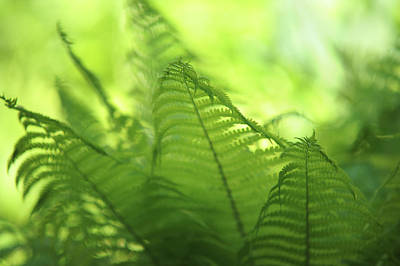 Photograph - Fern Leaves 2. Green World  by Jenny Rainbow