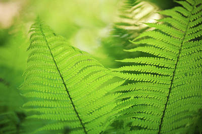Photograph - Fern Leaves 3. Green World  by Jenny Rainbow