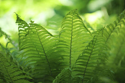 Photograph - Fern Leaves 4. Green World  by Jenny Rainbow