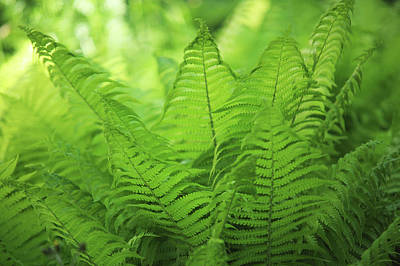 Photograph - Fern Leaves 5. Green World  by Jenny Rainbow
