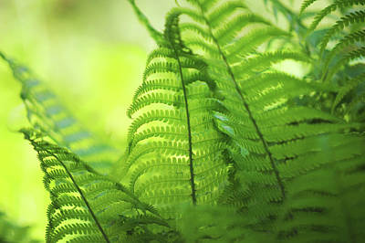 Photograph - Fern Leaves 6. Green World  by Jenny Rainbow