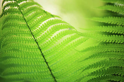Photograph - Fern Leaves 7. Green World  by Jenny Rainbow