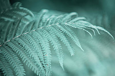 Photograph - Fern Leaves Abstract 1. Nature In Alien Skin by Jenny Rainbow