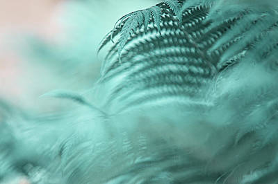 Photograph - Fern Leaves Abstract 2. Nature In Alien Skin by Jenny Rainbow