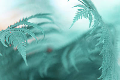 Photograph - Fern Leaves Abstract. Nature In Alien Skin by Jenny Rainbow
